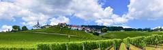 Vignoble de Féchy (Diegojack) Tags: féchy vaud suisse d7200 nikon nikonpassion paysages panorama vignes vignobles lacôte groupenuagesetciel fabuleuse