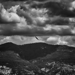 Vol au dessus de Remuzat (Patrice Fauré) Tags: vautour ciel noiretblanc bw montagne drômeprovençale 26 préalpes alpesdusud randonnée hiking sonya57 sony sonyalphadslr minolta75300