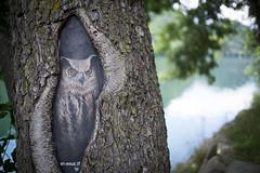 Gufo (bruno_68) Tags: discovery25 fuji xe2 levico gufo owl