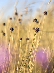 Untitled (Wouter de Bruijn) Tags: fujifilm xt2 fujinonxf56mmf12r grass seed pod bokeh yellow purple nature depthoffield veere walcheren zeeland nederland netherlands holland dutch outdoor