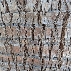 July 16: Groomed Palm Bark (earthdog) Tags: 2018 tree bark texture palm palmtree googlepixel pixel androidapp moblog cameraphone sanjose project365 3652018
