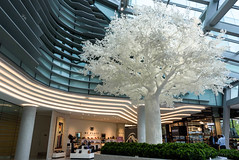 White as Snow (Jocey K) Tags: interior newzealand nikond750 southisland christchurch architecture buildings cafe shoeshop sculpture tree shop people display rebuild
