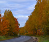 Golden alley downhill (МирославСтаменов) Tags: russia moscowregion pushchino road slope hill bend birch cloudscape forest autumn