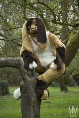 _DSC0043 (MM Furry Photo) Tags: bunny rabbit fursuit fursuiting portrait critterfactory pantoffel