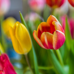 Flower (stephanrudolph) Tags: flower d750 nikon handheld deutschland europe eurpopa germany bielefeld nrw square 2470mm 2470mmf28g 2470mmf28