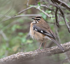 _DSC2409-editCC (Dave Krueper) Tags: africa southafrica birds birding bird