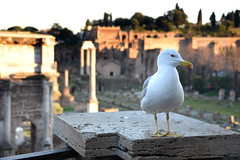 Roman Forum 古羅馬廣場 (MelindaChan ^..^) Tags: roman forum ancient archaeological sites chanmelmel mel melinda melindachan history heritage building famous tourist rome italy 意大利 羅馬 古羅馬廣場
