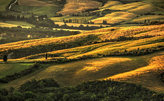The lonely horse (Fr@nk ) Tags: img9533tonemtoscanedef horse runaway italia italy landscape hay agriculture toscana toscane tuscany tuscan canon europe spectacular shadow light farm tree cypres frnk layercake layers perspective dream rève topf25 topf50 topf100 topf150 topf200 topf250 topf300 topf400 topf500 krumpaaf mrtungsten62 interesting north coth5 history lines avatar hiking photogear macromondays 7dwf newyork golden beach lyng interestingness acromondays adult centac101 mrtungsten62rec