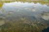 _DSC1146 (adrizufe) Tags: salburua vitoriagasteiz nature naturaleza greenblue landscape paisaje aplusphoto adrizufe adrianzubia visiteuskadi ilovenature araba basquecountry
