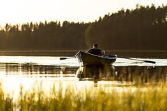 rowing on alke at sunset time 3 (VisitLakeland) Tags: finland lakeland summer auringonlasku backlight boat ilta järvi kesä lake luonto maisema nature outdoor outdoors rowing scenery soutaa sunset vastavalo vene water