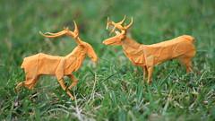 Deers (Marcos Origami) Tags: origami origa origamiart origamilatinoamerica ori origamilatino papi papiroflexia paper orange nature deer robert lang animals wildlife tissue han handmade art artwork paperart