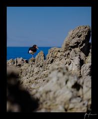 2018-04-22_Kaikoura_weekend_019.jpg (Rojobin) Tags: type beach kaikoura portraits landscapes seals animals nz newzealand places