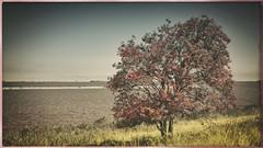 Jan Kerstenpad (bert • bakker) Tags: muiden jankerstenpad water lake meer tree boom oever bank nikon50mm18gse