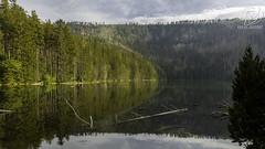 _DSC6291 (DDPhotographie) Tags: cz eu europe tchéquie cernejezero czechia czeck lac lake landscpae natural nature parcnaturel park payage plzen républiquetchèque sumava zeleznaruda železnáruda plzeňskýkraj