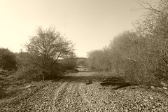 Old railway trackbed between Catcliffe and Treeton,  Sheffield  (former SDR route)   April 2018 (dave_attrill) Tags: catcliffe sheffield railway line disused trackbed remains goods sdr sleeper treeton junction ballast april 2018 sheffielddistrictrailway southyorkshire