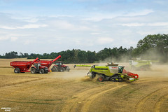 CTF Wheat Harvest | CLAAS // CASE IH // HORSCH (martin_king.photo) Tags: harvest harvest2018 ernte 2018harvestseason ctfharvest controllentrafficfarming ctf wheat grain combineharvester combine harvester new modernmachine summerwork powerfull martin king photo machines strong agricultural great czechrepublic agriculturalmachinery farm working modernagriculture landwirtschaft martinkingphoto moisson machine machinery field huge big sky agriculture power dynastyphotography lukaskralphotocz day fans work place yellow gold golden eos country lens rural camera outdoors outdoor goldenhour colours landscape fields lines controlledtrafficfarming claas claaslexion horsch horschtitan goldenfields caseih magnum380cvx caseihmagnum magnum