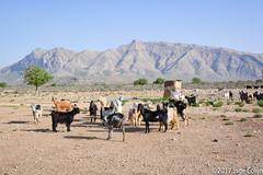 20180330-_DSC0157.jpg (drs.sarajevo) Tags: sarvestan ruraliran iran nomads farsprovince chamsatribe