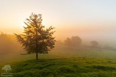 Morning mist (James Mc Innes) Tags: 1018mm 2018 burrowmump canon canon700d dawn jamesmcinnes landscapes lightroom mist nature somerset sunrise trees