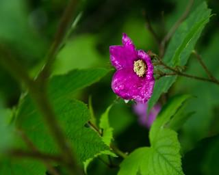 Wet Purple Flower