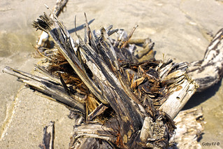 La naturaleza hace... y deshace