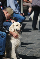 Dogs of Norway (Jemma Louise Lee) Tags: norway bergen dog retriever golden owner pet explore mananddog mansbestfriend