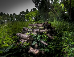 Wood (Johnny.fr) Tags: canon 650d tokina1116 tokina bois wood buche gif texture poster nature lanscape paysage