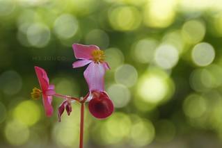 Flor con bokeh