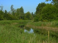 Katinger Watt 2 (Sophia-Fatima) Tags: eiderstedt nordfriesland schleswigholstein deutschland naturschutzgebiet naturerlebnisraumkatingerwatt euvogelschutzgebiet