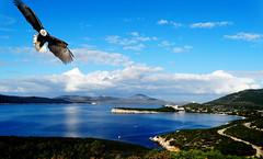 Il ritorno dell' aquila (antonè) Tags: aquila alghero sardegna mare nuvole cielo portoconte mediterraneo isola rapace