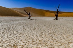 deadvlei (peter birgel) Tags: namibia deadvlei sossusvlei africa dunes tree travel travelphotography nikon d7000 landscape desert