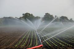 Making it rain (Johan Moerbeek) Tags: raindrops water hose landbouw sproeien farm heiloo