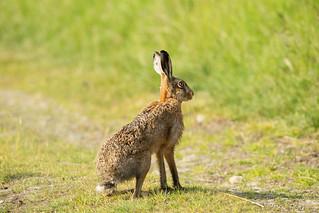 Wildlife around Magdalen June 2018 008