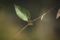 Breathe In (Carla Mountain Spirit) Tags: leaf green macro nature breathein closeup dof macrodreams pentacon50 flora carlafreire