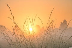 Sunrise with Mist (Martine Lambrechts) Tags: sunrise with mist nature morning