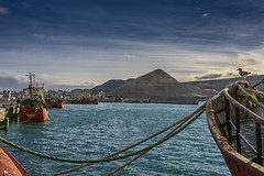Juan Salvador (Mauro Esains) Tags: gaviota juan salvador cerro chenque mar puerto pesqueros golfo pesca industria
