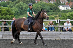 Jenga (meniscuslens) Tags: rescue pony bay horses horse hounds heroes charity arena rider buckinghamshire aylesbury high wycombe princes risborough