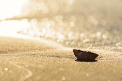 Golden Beach (NathalieSt) Tags: europe france hérault lagrandemotte languedocroussillon occitanie leverdesoleil nature nikon nikond750 nikonpassion nikonphotography sunrise