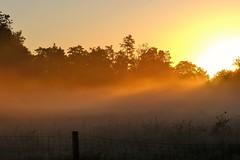 Sunrise and mist (peeteninge) Tags: sunrise mist morninglight morning nature weather orange sunlight natuur ochtend zonsopgang zonsopkomst zonlicht nevel fujifilm fujifilmxt2 xf80mmf28
