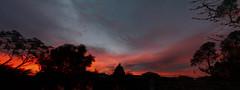 Sunrise Panorama (Greenstone Girl) Tags: sunrise reds windy panorama trees silhouette