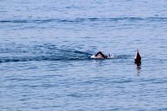 Alla boa e ritorno (meghimeg) Tags: 2018 lavagna nuotatore nuoto swim mare sea acqua water boa rosso red