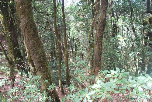 Національний парк Гарахонай, Гомера, Канарські острови  InterNetri  0700