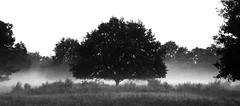 Morning fog (na_photographs) Tags: nebel frühnebel morgen tree baum heide
