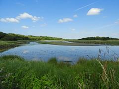 Peaceful lagoon:  10.7.18. (VolVal) Tags: dorset bournemouth hengistburyhead lagoon landseascape sky reeds july