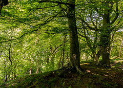 2018-05-15 Matlock-1400814.jpg (Hands in Focus) Tags: derbyshire lumixfz1000 peakdistrict trees matlock