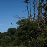 Fishlake Meadows: Osprey & fish thumbnail