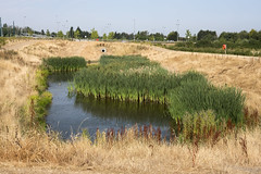 Heatwave Oasis (simonannable) Tags: fujifilmxt2 oasis habitat uk heatwave 2018 july summer fujifilm scene image nature hot weather britain sanctuary wet toton tram hollow wildlife haven water shrinking waterhole wateringhole green dead grass dry arid parched fujifilm27mm reedbeds naturereserve lush greenery hole stormdrain