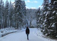 Zakopane-November'17 (178) (Silvia Inacio) Tags: zakopane poland polónia polska snow neve tree árvore mountain montanha tatry tatrymountains tatras tatramountains friends
