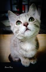 Adopt me!   Update: Adopted. (Oscardaman) Tags: san francisco aspca adoption animal shelter·24hrs 2343 fillmore st ·415 7626472 adopt me