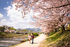 sakura '18 - cherry blossoms #9 (Kamigamo, Kyoto) (Marser) Tags: xt10 fuji raw lightroom japan kyoto kamigamo kamogawa river flower cherry sakura couple 京都 上賀茂 賀茂川 桜
