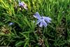 Farbtupfer (J.Weyerhäuser) Tags: hechtsheim frühling pflanze wiese blüte halm